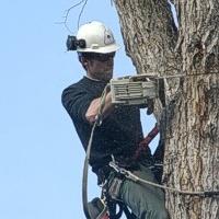 Обрезка ландшафтных деревьев. Арбористика